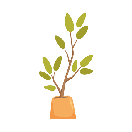 pipal: Rubber plant, pipal, bay tree in pot. Interior home and office potted plant. Houseplant cartoon vector illistration. Interior decoration. Flowerpot drowth and gardening.