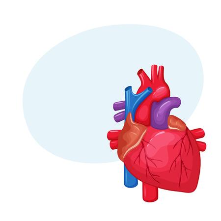 Reptil Schematische Herz Anatomie Vektor-Illustration Auf Weißem ...