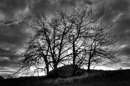 Monolith: Mystical monolith hidden under trees before storm B&W photography