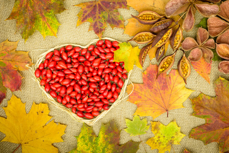 natur: Hearty greetings autumn with rose hip, land lotus, fallen leaves and brachychiton natur on jute background
