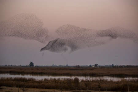 migrated: Flock birds