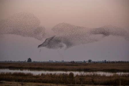 bandada pajaros: Flock pájaros