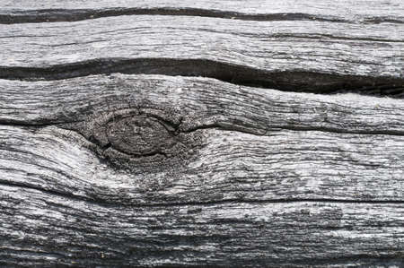 snag: Gray surface with a crack of wooden logs and branches Stock Photo