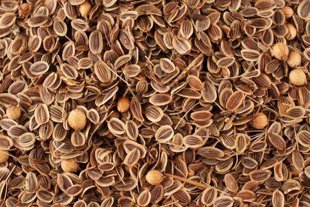 Sprinkle of fennel seeds photo