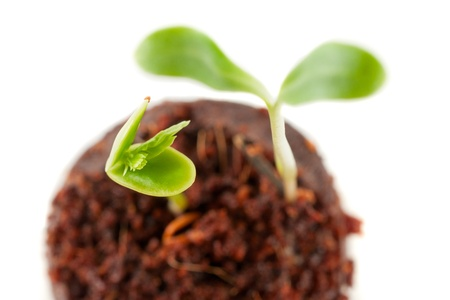 Two green sprouts growing from the earth on a white background