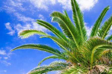 Palm branches against the blue sky  photo