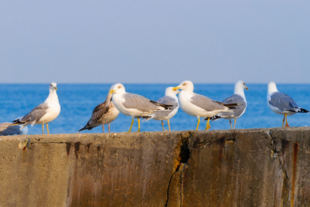 A flock of seagulls on the concrete breakwater
