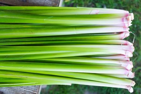 calamus: Roots and foliage Acorus calamus Stock Photo