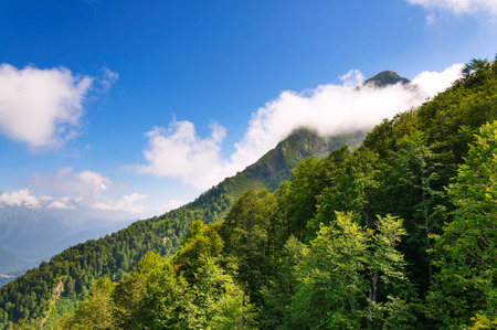Mountain peak hidden cloud  Summer  Stock Photo