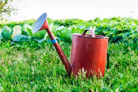 garden lawn: Old metal watering can garden on the bright green grass. Summer, sunny day. Stock Photo