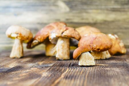 fungi: Porcini. Placer white wild mushrooms on a rustic wooden background. Stock Photo