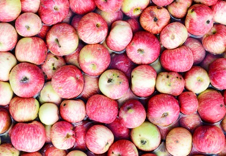 Many red apples floating in the water. Wash the fruit at harvest time. Stock Photo