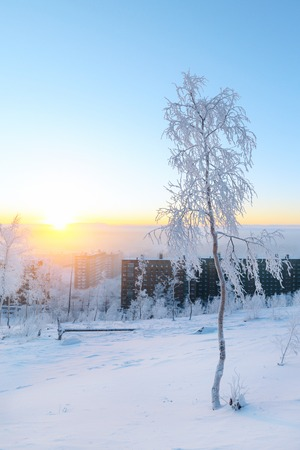 Birches in hoarfrost, morning, frosty dawn in the Arctic tundra. Stock Photo