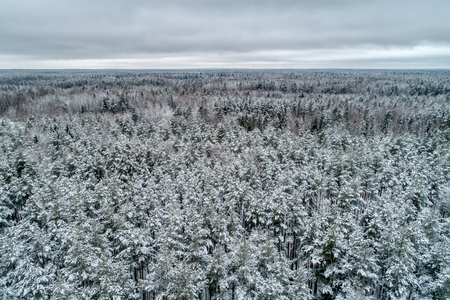 Snow covered forest. Typical European winter landscape. Its a nasty day. Stock Photo