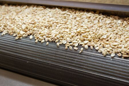 Industrial oven for roasting seeds, nuts, peanuts. Nuts lie in bulk on a metal tape. Stockfoto