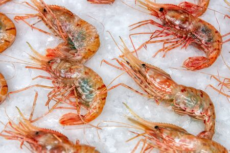 Boiled sea prawns lie on ice. Shrimps are beautifully laid