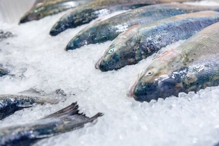 Fish market showcase. Fresh chilled salmon with many carcasses lies on ice crumbs.