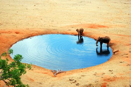 afrika: An elephant in the water hole