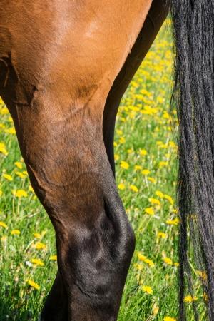 agleam: una pata de caballo en el prado verde