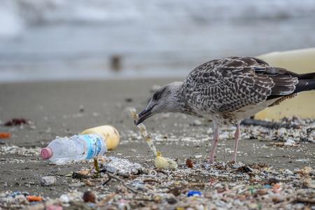 나폴리에서 해변 쓰레기 사이에 음식을 찾고 갈매기