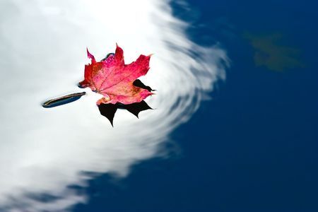 red leaf floating in water with sky reflection photo