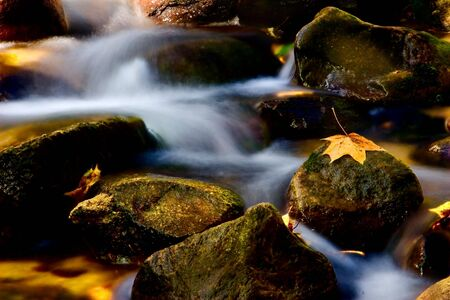 rivulet: rivulet in autumn with yellow leaf on stone Stock Photo