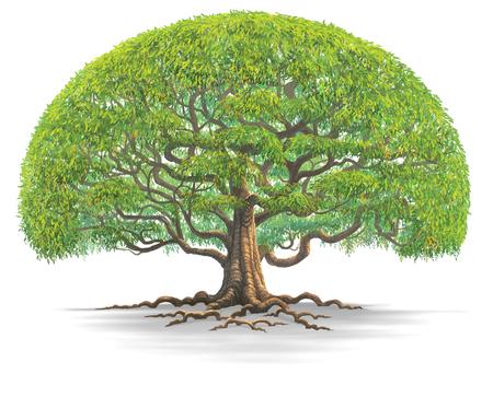 Een grote boom isoleren op een witte achtergrond