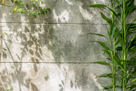 Shadow of plant on dirty wall