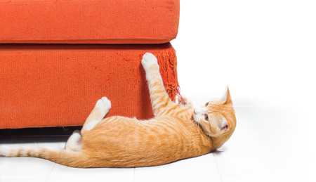 Kitten scratching orange fabric sofa on white background