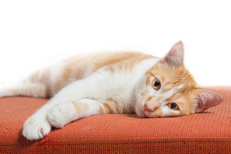 Kitten sitting on orange fabric sofa on white background