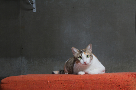 Cats sitting on scratched orange fabric sofa on cray background