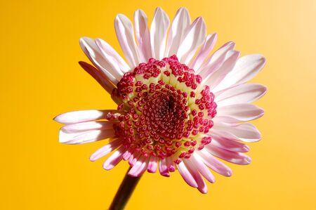 droop: droop flower Stock Photo