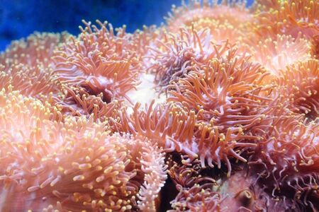beautiful coral in aquarium photo