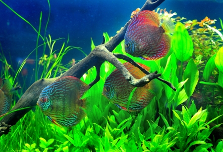Beautiful fish in aquarium  Stock Photo - 16110913