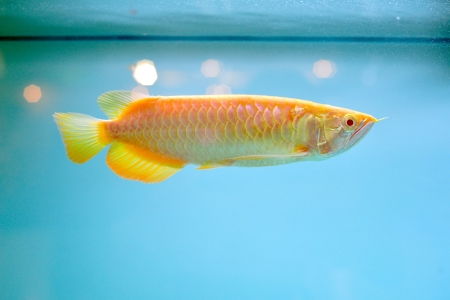 Beautiful fish in aquarium  Stock Photo - 16110904
