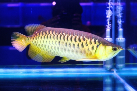 Beautiful fish in aquarium  Stock Photo - 16110907
