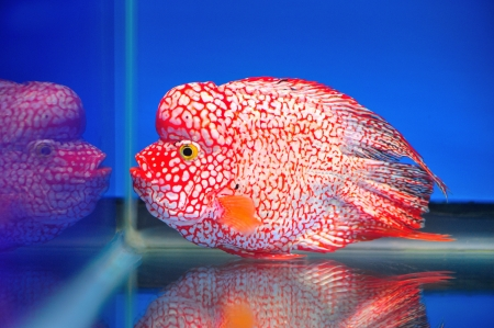 Beautiful fish in aquarium  photo