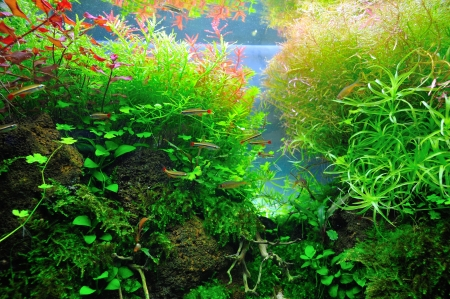 Beautiful planted tropical aquarium with fishes photo