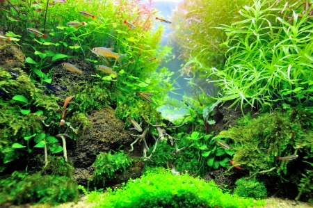 Beautiful planted tropical aquarium with fishes