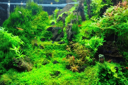 Beautiful planted tropical aquarium with fishes Stock Photo - 16110911