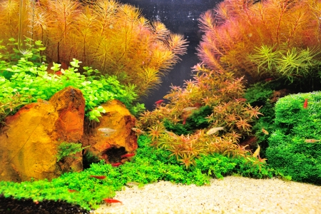 Beautiful planted tropical aquarium with fishes Stock Photo - 16110917