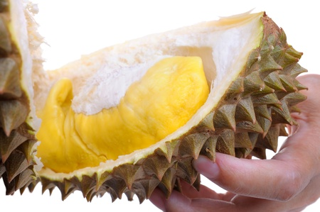 Closeup yellow durian in hand. photo