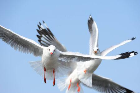 closeup seagulls action in nature photo