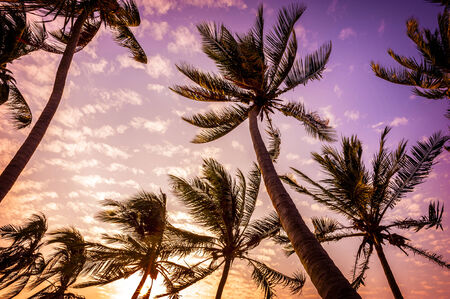 silhouette coconut trees in colorful sunset photo