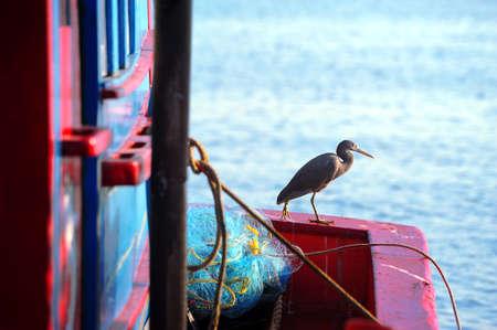 seabird: closeup seabird holding on fishing boat