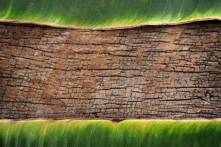vintage background, dry banana leaf on old wood photo