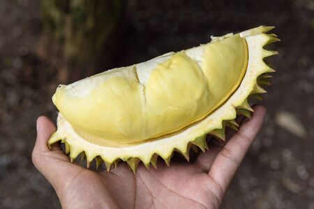 peeled yellow Mon Thong durian in hand