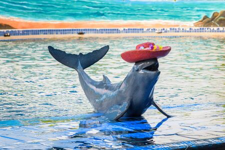 perform: CHANTHABURI, THAILAND - MAY 07, 2015: Instructors perform with Dolphins at Oasis Sea World in Chanthaburi, Thailand.