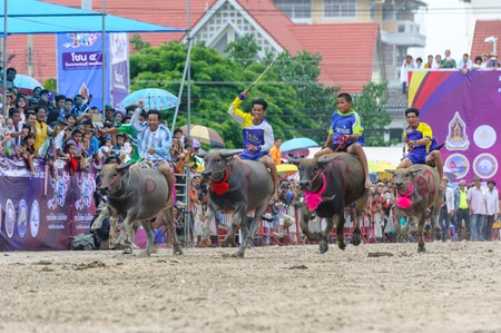 racing festival: CHONBURI, THAILAND - OCTOBER 18, 2013: Unidentified peoples raced buffalos in 142nd Buffalo Racing Festival. This festival is a tradition of Chonburi.