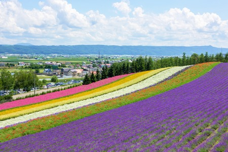 beautiful flowers garden in Hokkaido, Japan. 版權商用圖片 - 54362582